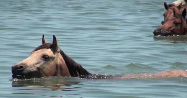 2012 pony round up