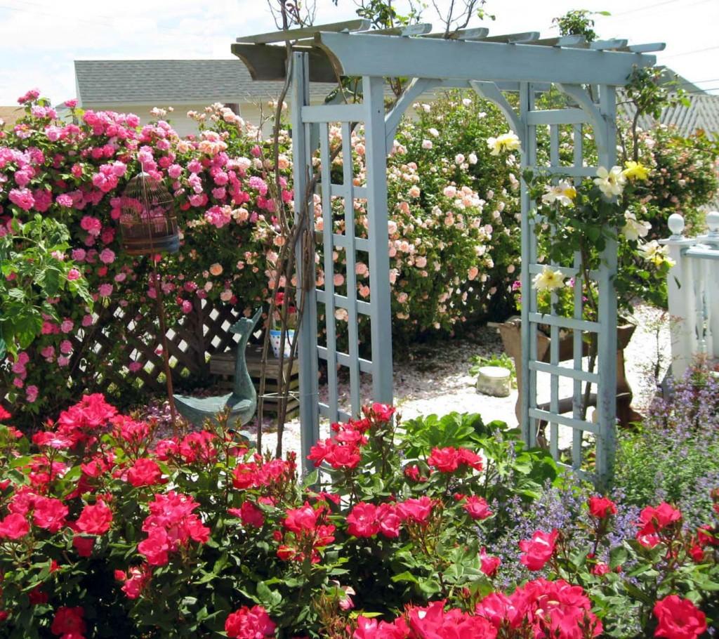 Miss Molly's English Garden