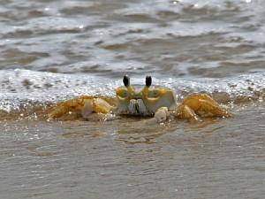 chincoteague-national-wildlife-refuge-crabbing