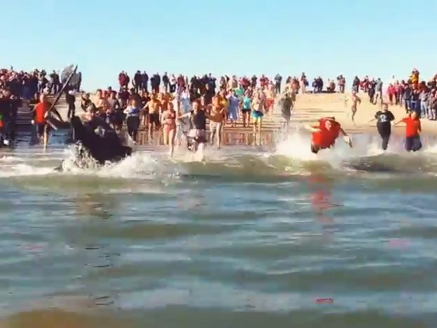 Chincoteague Polar Pony Plunge