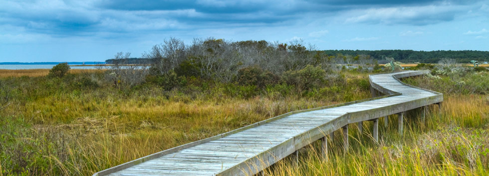 assateague-boardwalk
