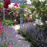miss-mollys-garden