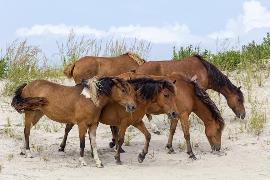 2016 Spring Pony Roundup