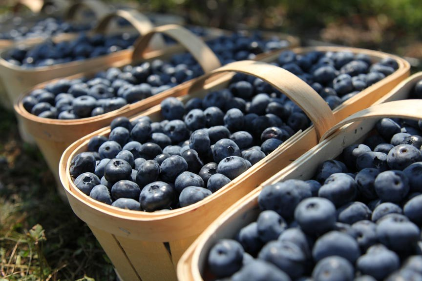 2016 Chincoteague Island Blueberry Festival