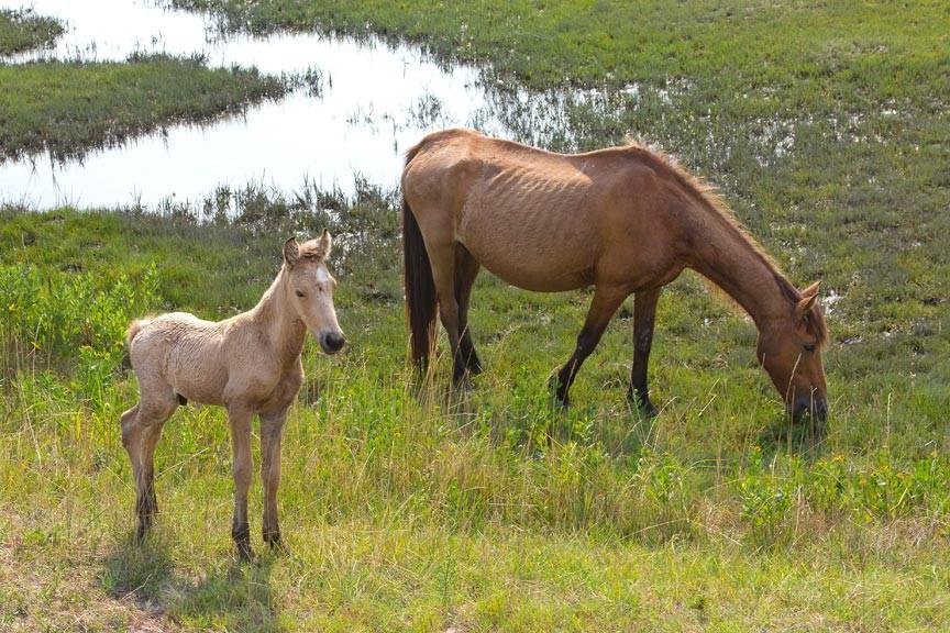2018 Spring Pony Roundup