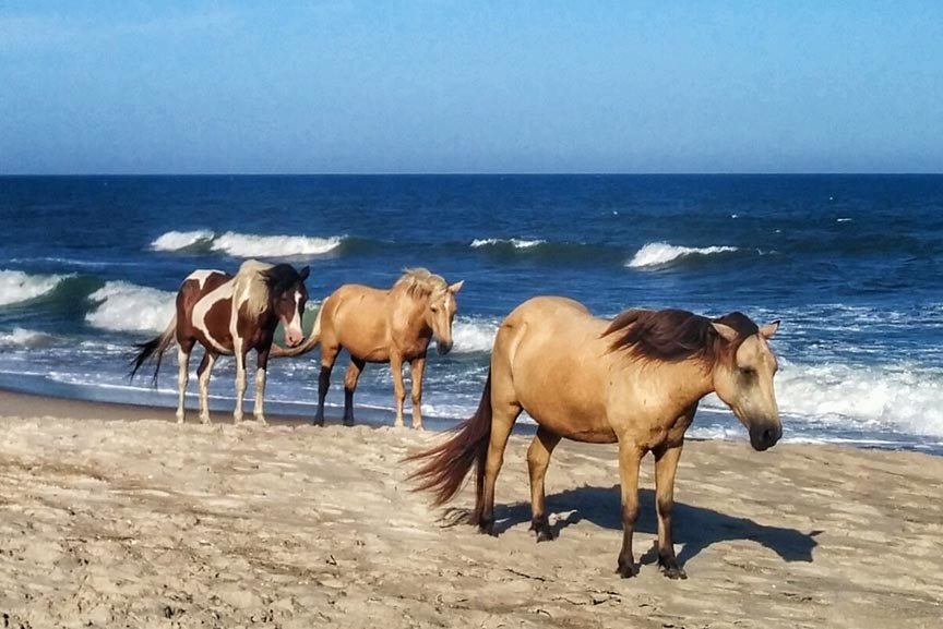Chincoteague Pony Roundup Fall 2019