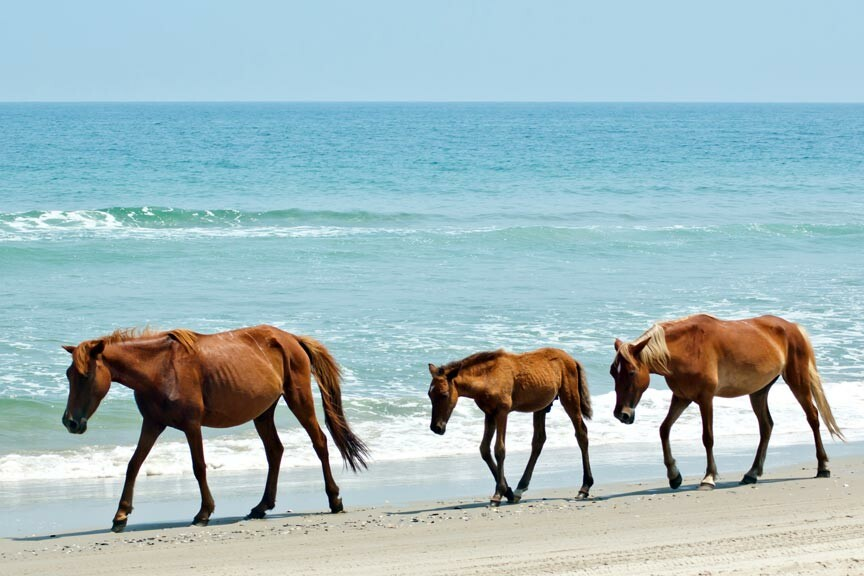 A Chincoteague Island Getaway to see the wild ponies