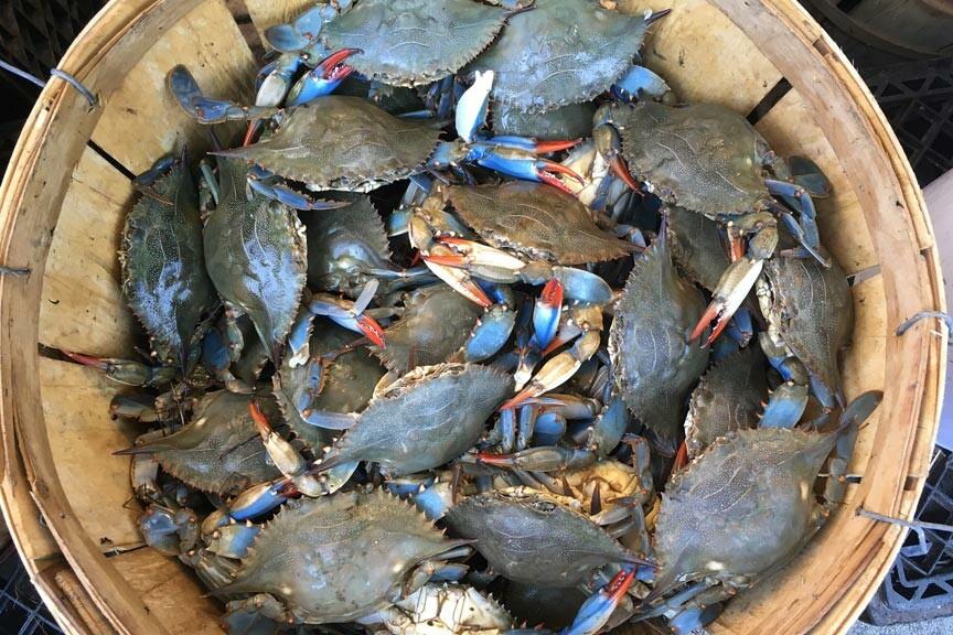 bushel of blue crabs Chincoteague