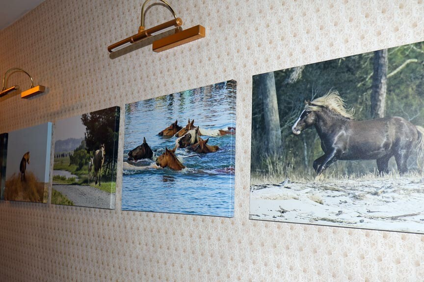 DSC Photography exhibition at Miss Mollys