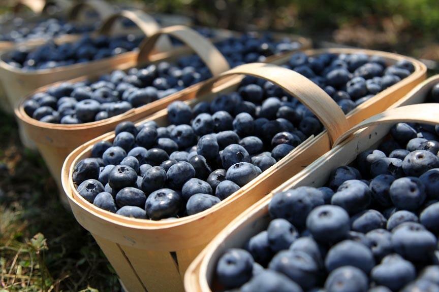 Chincoteague Blueberry Festival 2021