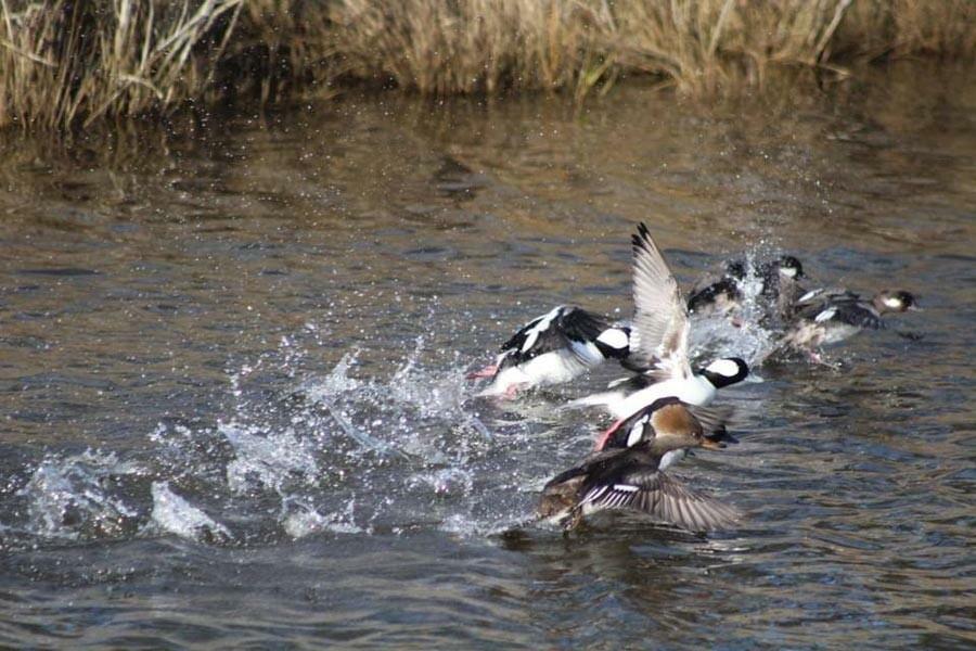 Waterfowl Weekend 2021