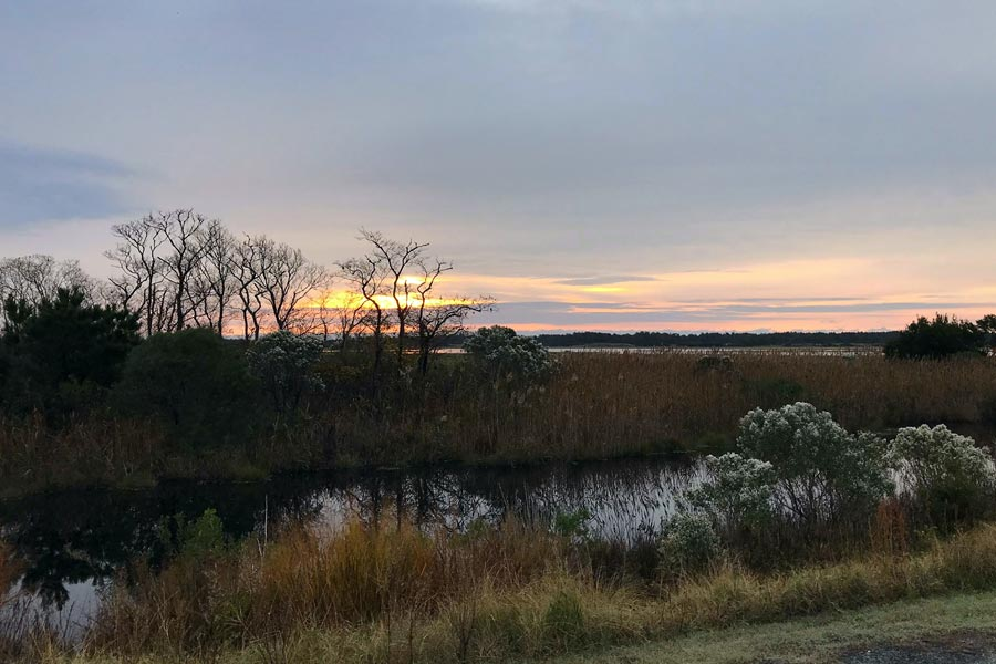 Chincoteague National Wildlife Refuge Waterfowl Weekend 2021